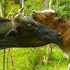 Wie wir unsere Kühe halten